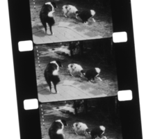 Transfer 16mm Movie Film to Digital