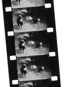 Transfer 16mm Movie Film to Digital